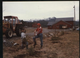 Planting av træt langs gårdsveg